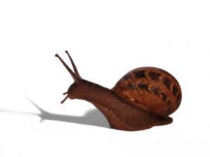 snail-1181451-m
